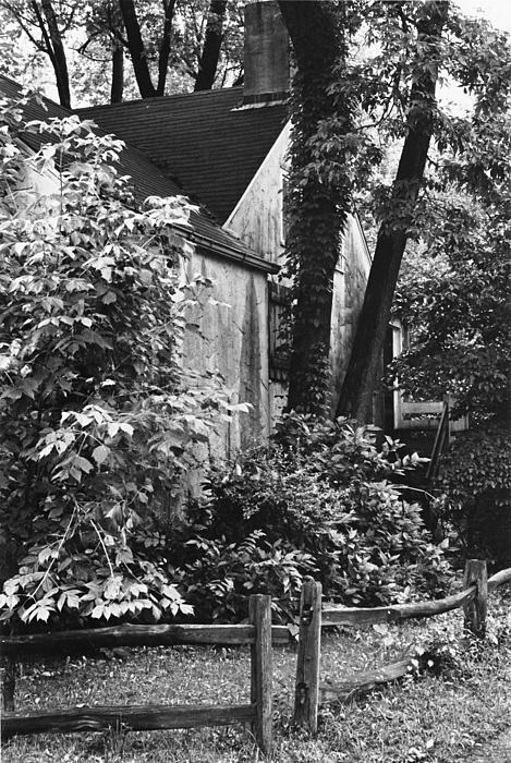 Trees Photograph - Composition No. 1 by Kathryn Donatelli