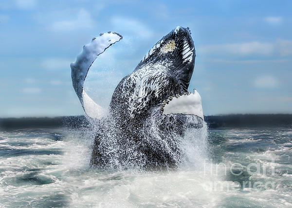 Whale Photograph - Dances With Whales by Nancy Dempsey
