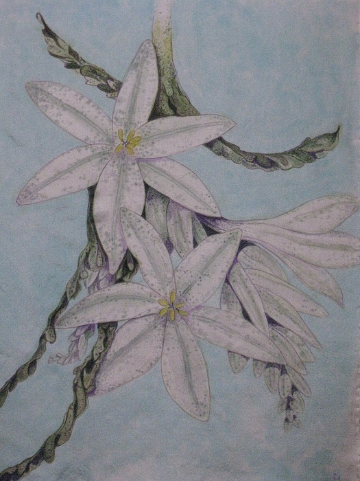 Flowers Painting - Desert Lillie by David Kelly