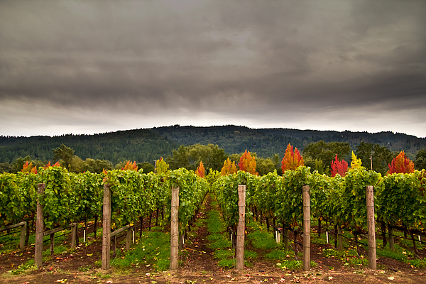 Napa Photograph - Estate by Ryan Weddle