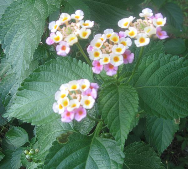 Flowers Photograph - Eye Candy by Juliana  Blessington