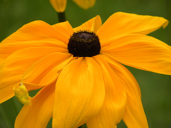 Flowers Photograph - Flower by Evan Pullins