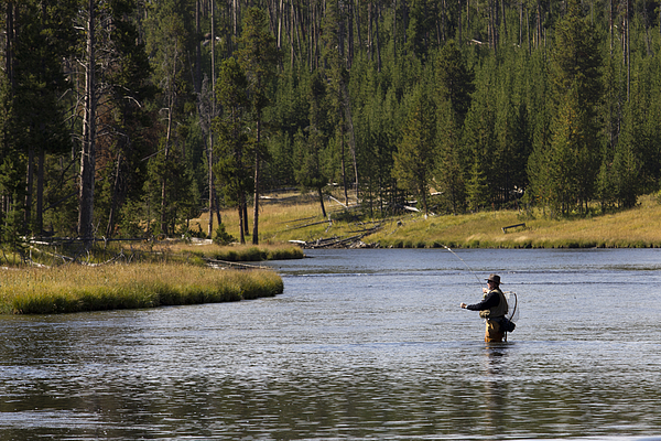 Fly fishing in the firehole river yellowstone photograph for Yellowstone river fishing