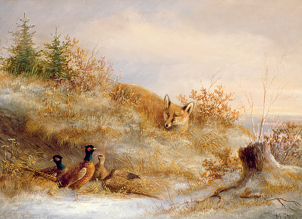 Birds Painting - Fox And Pheasants In Winter by Anonymous