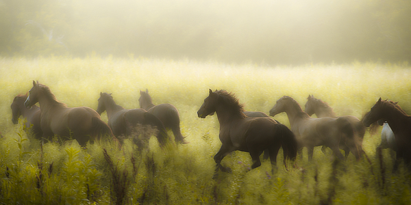 Equine Photograph - Freedom by Ron  McGinnis