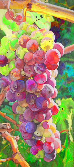 Grapes Photograph - Grapes by Danielle Stephenson