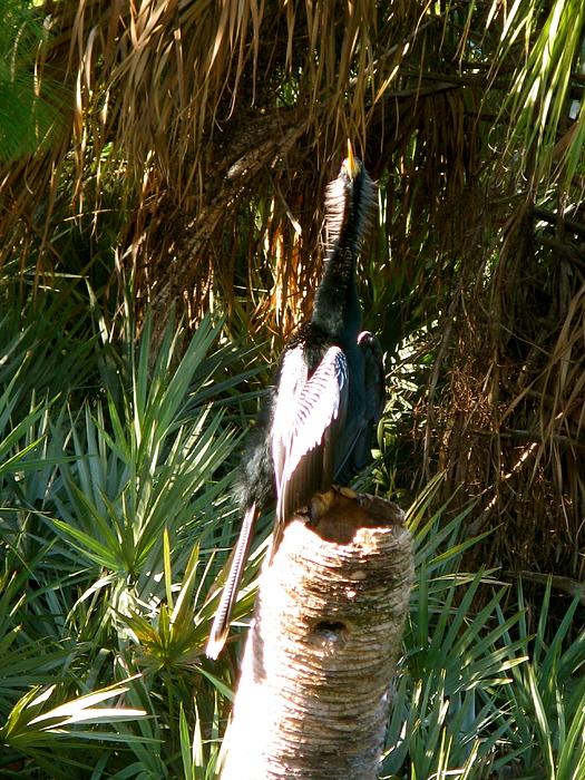 Bird Photograph - Green Cay Bird by Fanny Diaz