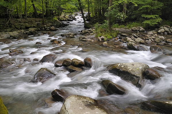 Little Pigeon River Photograph - Greenbrier In The Great Smoky Mountains by Darrell Young