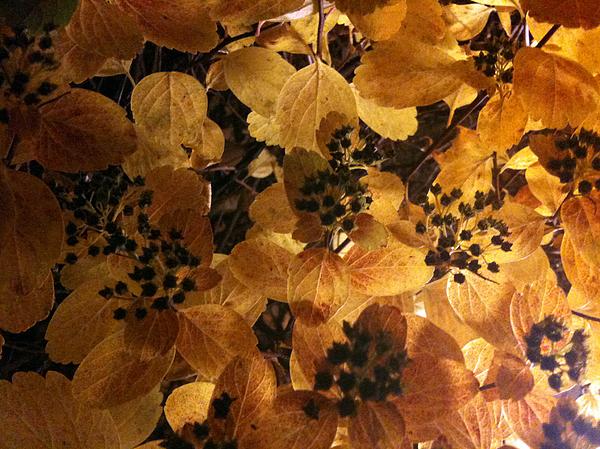 Leaf Photograph - Light In The Dark by Sara Efazat