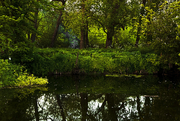 Countryside Photograph - Magic Forest by Svetlana Sewell