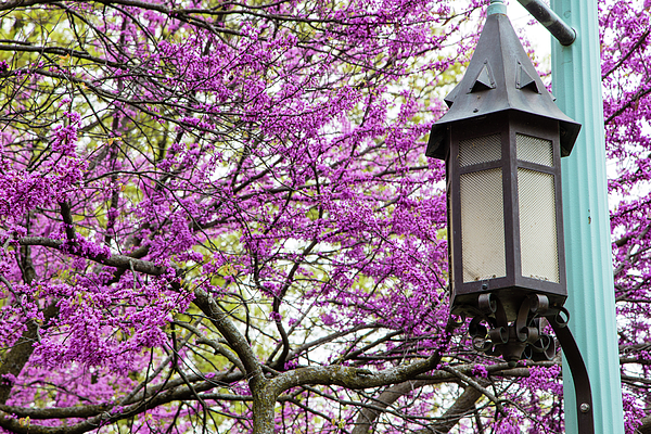 Michigan State University Spring 7 Photograph By John Mcgraw