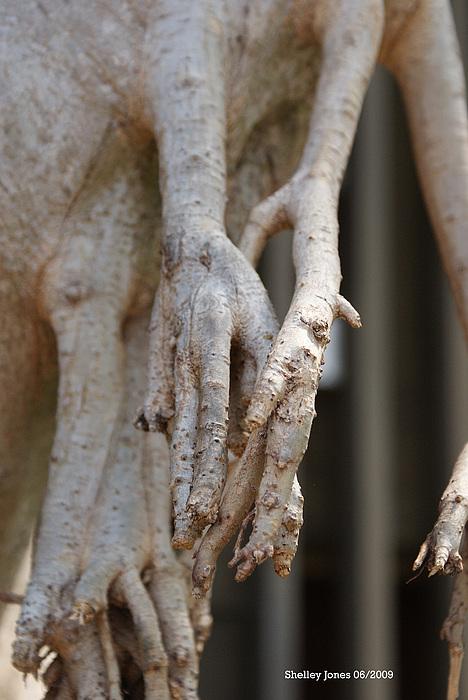 Praying Hands Photograph - Nature by Shelley Jones