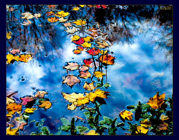 Fall Photograph - New England Water Color by William Bray