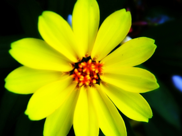 Yellow Flower Photograph - Oh Sunny Day by Hannah Miller
