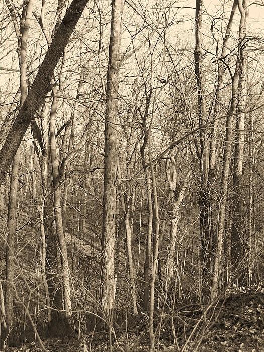 Landscape Photograph - Quiet by Joseph Norvell
