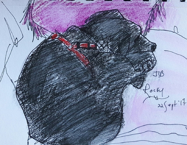 Pen And Ink Drawing Drawing - Rocky by Janet Butler