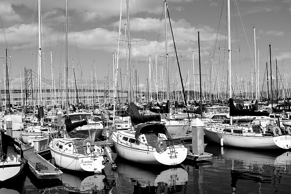 Black And White Photograph - Sail Boats At San Francisco China Basin Pier 42 With The Bay Bridge In The Background . 7d7666 by Wingsdomain Art and Photography