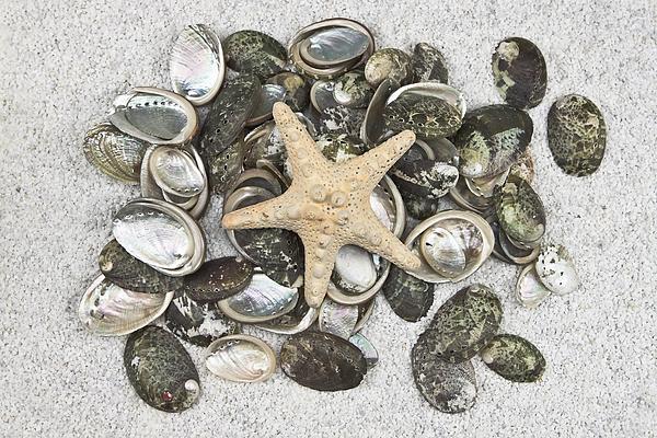 White Photograph - Seashells by Joana Kruse