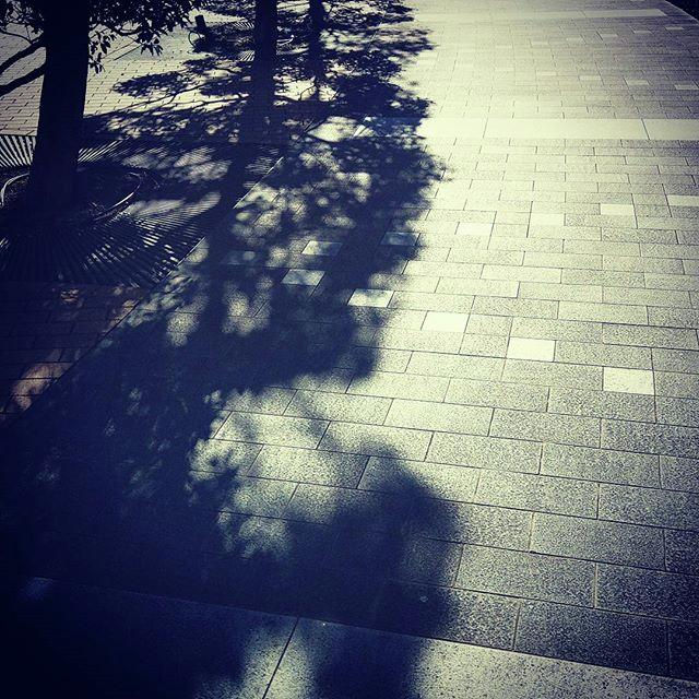 Shadow Photograph - #shadow #光と影 by Bow Sanpo