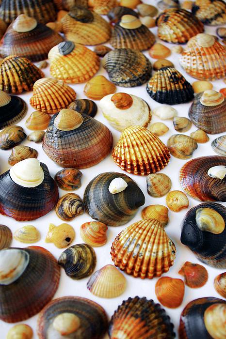 Aquatic Photograph - Shell Background by Carlos Caetano