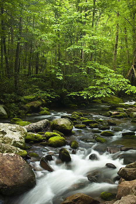 River Photograph - Smoky Mountain Stream by Andrew Soundarajan