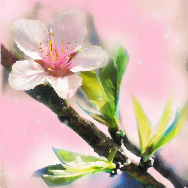 Art Photography Photograph - Spring Sunrise by Gina Signore
