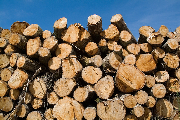 Aquitaine Photograph - Stack Of Wooden Logs In The Landes Forest by Sami Sarkis