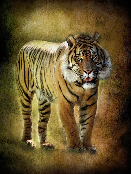 Sumatran Tiger Photograph - Sumatran Tiger  by Saija  Lehtonen
