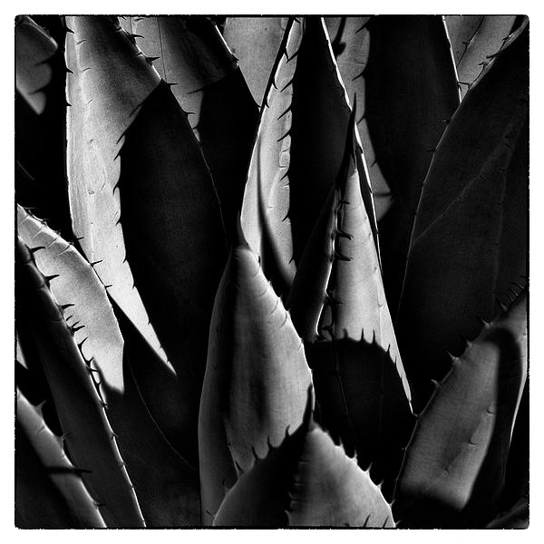 New Mexico Photograph - Sunlit Cactus by David Patterson