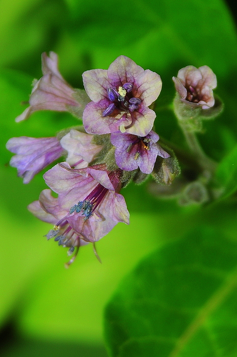 Image Photograph - Tiny Purple Flower by Patrick  Short