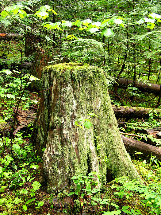 Moss Photograph - Transition by Idaho Scenic Images Linda Lantzy