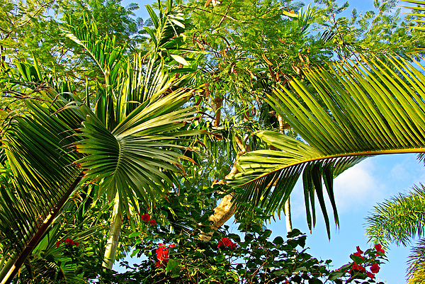 Tropical Photograph - Tropical Plants by Zalman Latzkovich