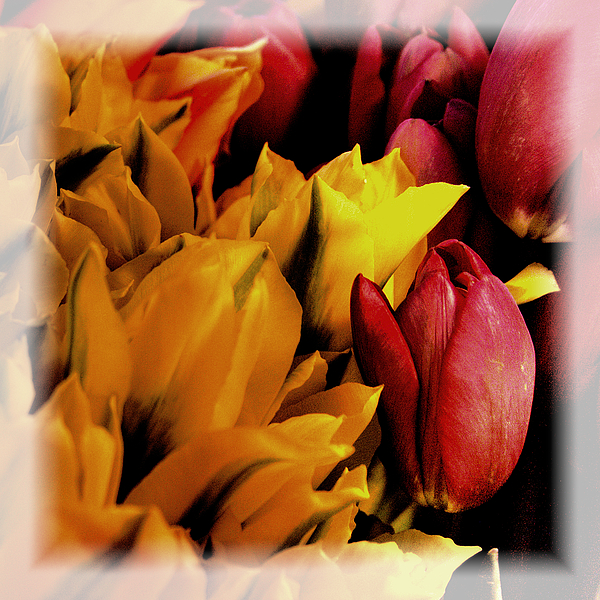 Tulips Photograph - Tulips  by David Patterson