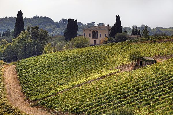 Montalcino Photograph - Tuscany by Joana Kruse