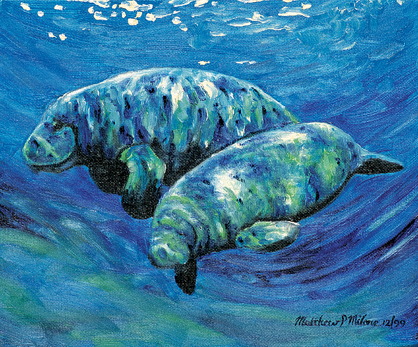 Manatees Painting - Two Manatees by Matthew Milone