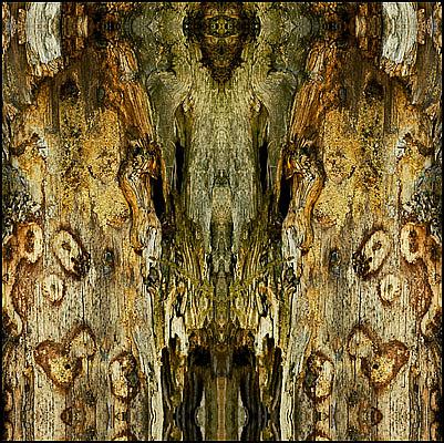 Nature Photograph - Untitled by Daniel G Walczyk