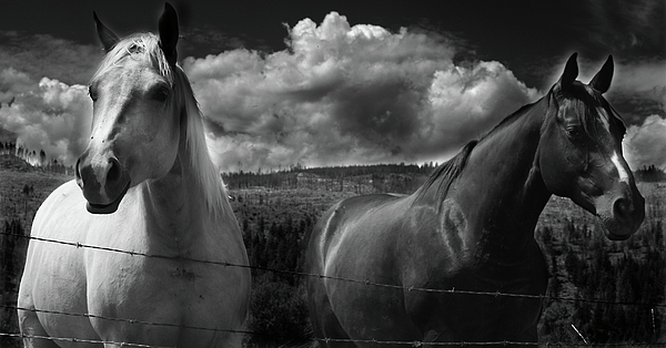 Rural Photograph - Us by Jerry Cordeiro