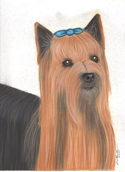Dog Painting - Yorkshire Terrier by Linda Henthorn