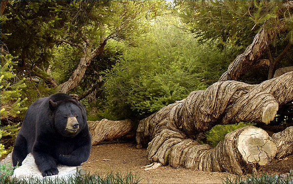 Animals Digital Art - 1235a-timberland Woody by George W Banks