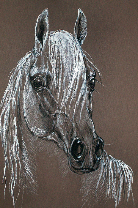 Horse Pastel - Arabian Horse  by Angel  Tarantella