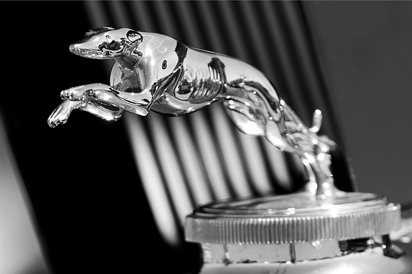 Black And White Photograph - 1930 Lincoln Berline Hood Ornament by Jill Reger