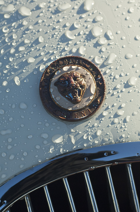 Hood Ornament Photograph - 1954 Jaguar Xk120 Roadster Hood Emblem by Jill Reger
