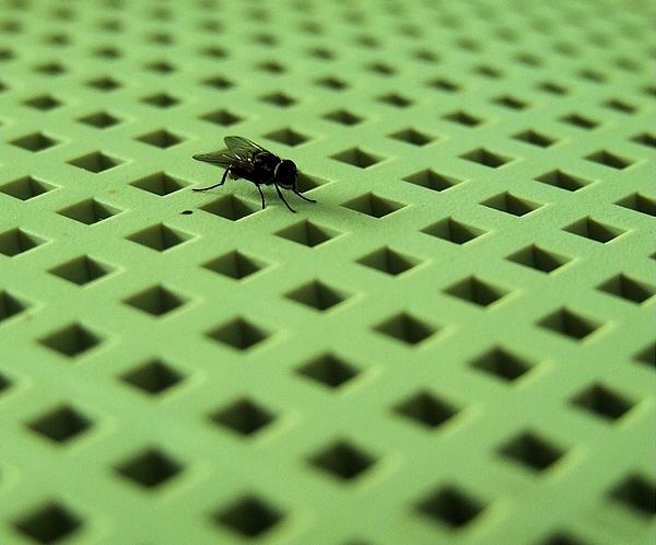 Fly Photograph - The Fly by Andrei Constantin Visan Preda