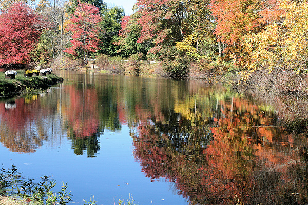 Autumn Photograph - Autumn In New England by Amy Holmes