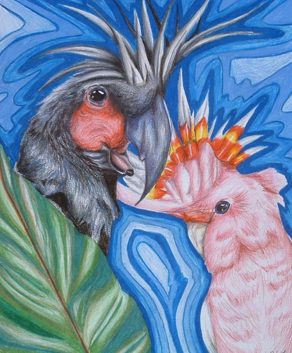 Bird Drawing - Birds  by Andrea  Darlington
