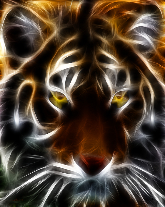 Animal Photograph - Eye Of The Tiger by Wingsdomain Art and Photography