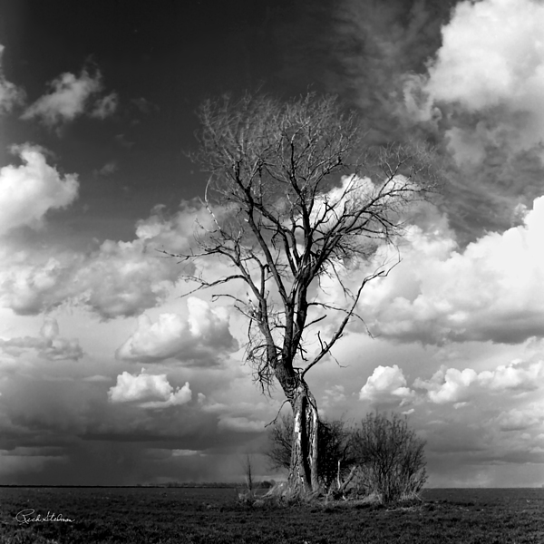 Tree Photograph - Lone Tree by Rich Stedman