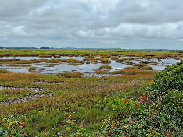 Plum Island Photograph - Plum Island by Marcia Lee Jones