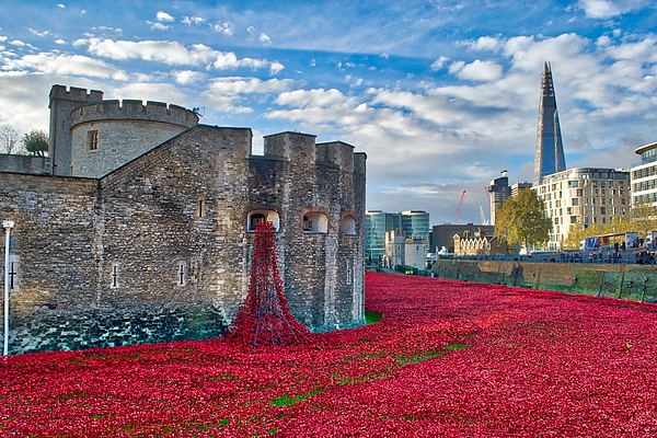 Tower Of London Poppies Photograph - Poppies At The Tower Of London by Chris Day