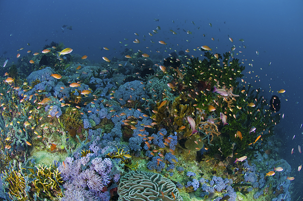 Fish Photograph - Reef Scene With Coral And Fish by Mathieu Meur